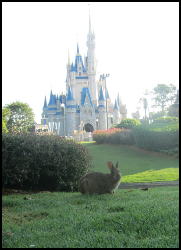 lapin à Disney World